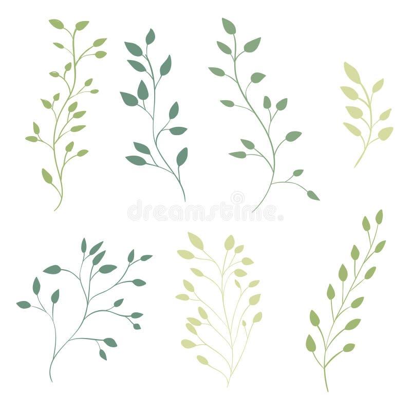 Branches fleuries tirées par la main avec des feuilles Vecteur illustration de vecteur