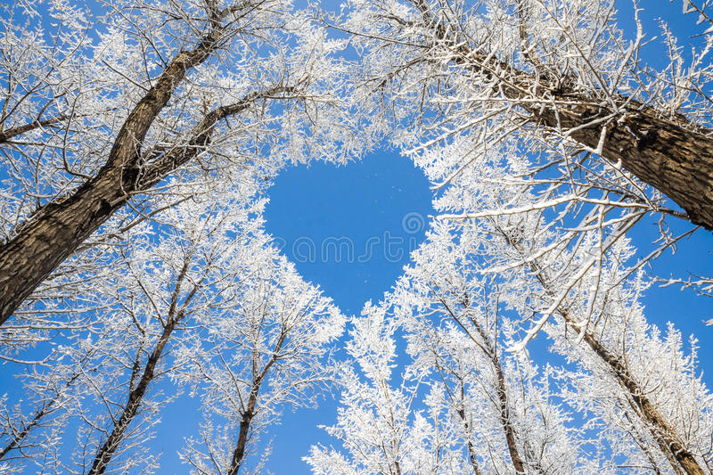 Branches form a heart-shaped pattern royalty free stock image