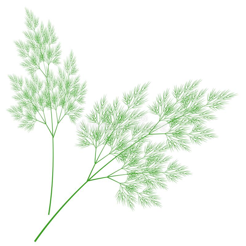 Branches of fresh dill branches. Tasty and healthy spicy grass. Seasoning with meat and vegetable dishes. Vector illustration.  vector illustration