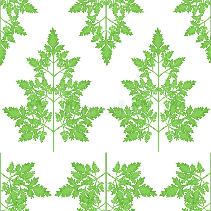 Branches of fresh parsley branches. Tasty and healthy spicy grass. Seasoning with meat and vegetable dishes. Vector illustration stock illustration