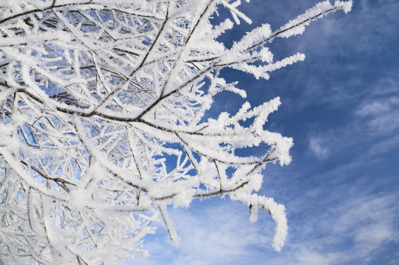 Branches in frost. Close up of frozen branches against blue sky. Shallow DOF stock image