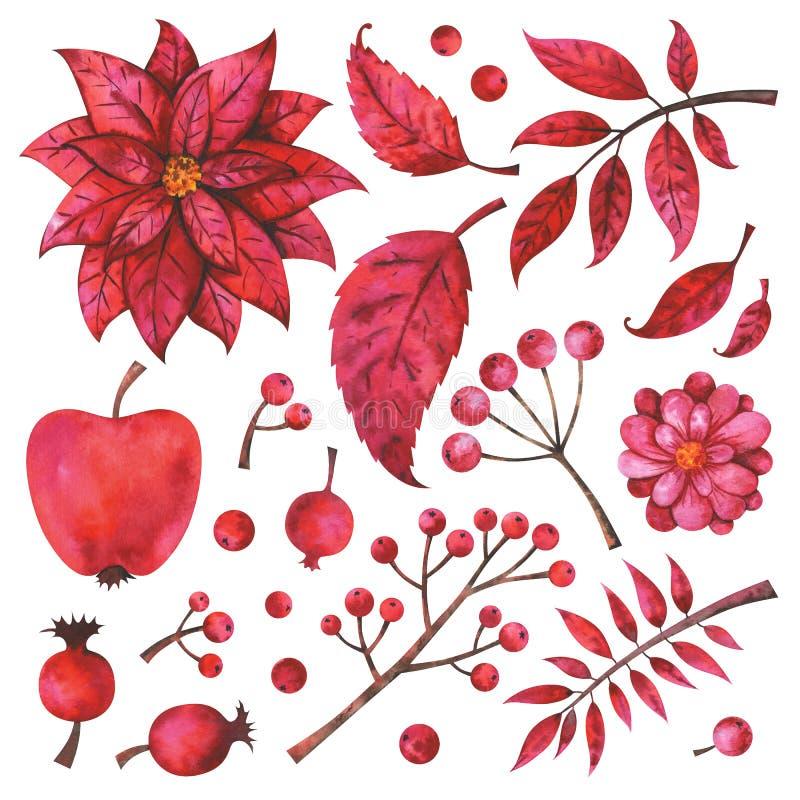 Branches, fruit, fleur, plantes peintes à la main et baies rouges d'isolement sur le fond blanc illustration libre de droits