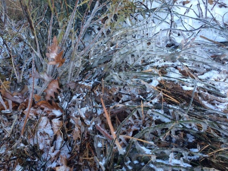 Branches glacées photos libres de droits