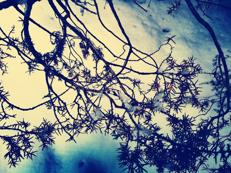 Branches glaciales en hiver images stock