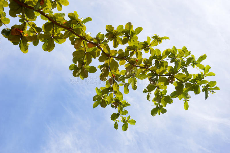 Download Branches stock image. Image of natural, branch, organic - 35137617