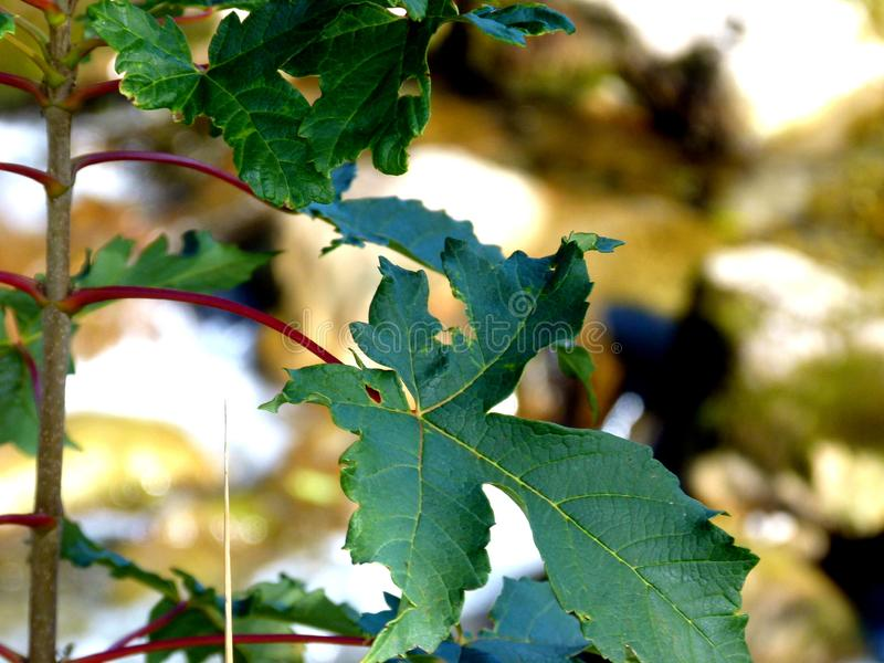 branches with green leaves against light blurred background royalty free stock images