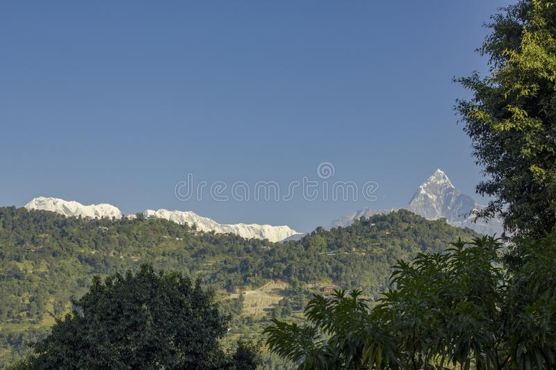 Branches of green trees against the wooded slopes of the mountains and the snowy peaks of Annapurna under a clear blue sky. A branches of green trees against the royalty free stock photo