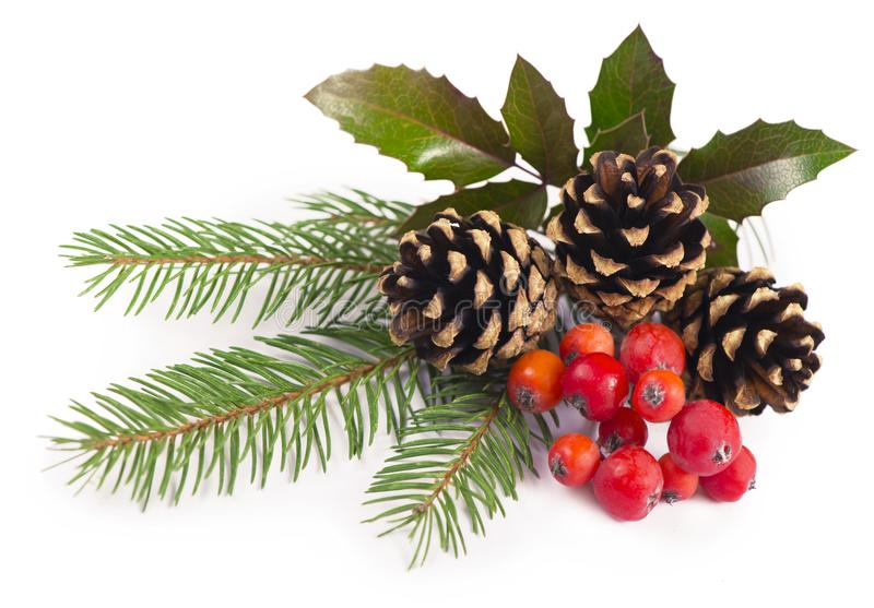 The branches of holly, pine cones, mountain ash berries. Branches of holly, pine cones, mountain ash berries royalty free stock photos