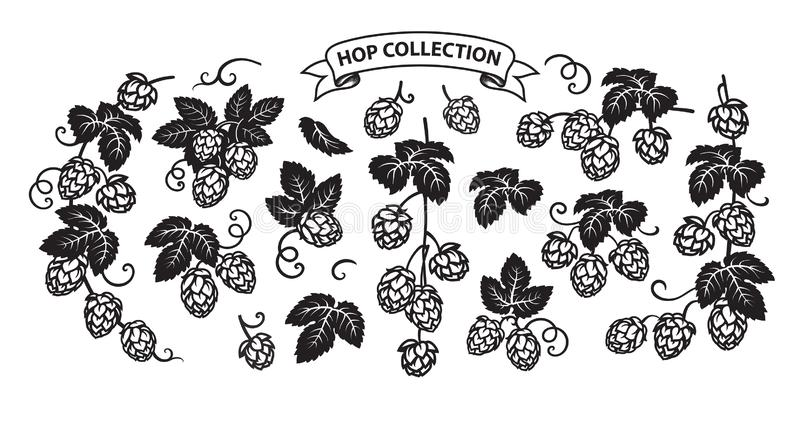 Branches of hops. Set of elements for brewery design. Hop cones with leaves icons. vector illustration isolated on white stock illustration