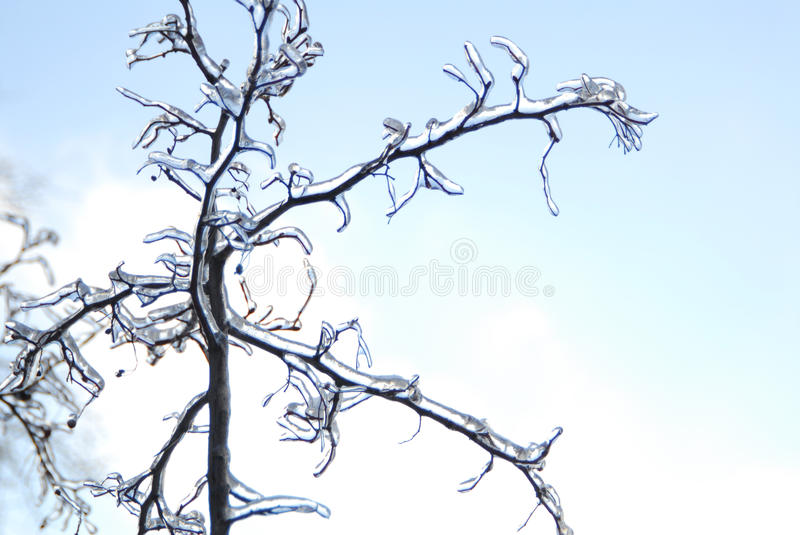 Branches are ice-covered. royalty free stock image