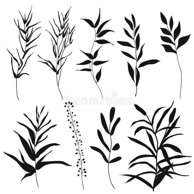 Branches with leaves, herbs, wild plants, trees. stock illustration