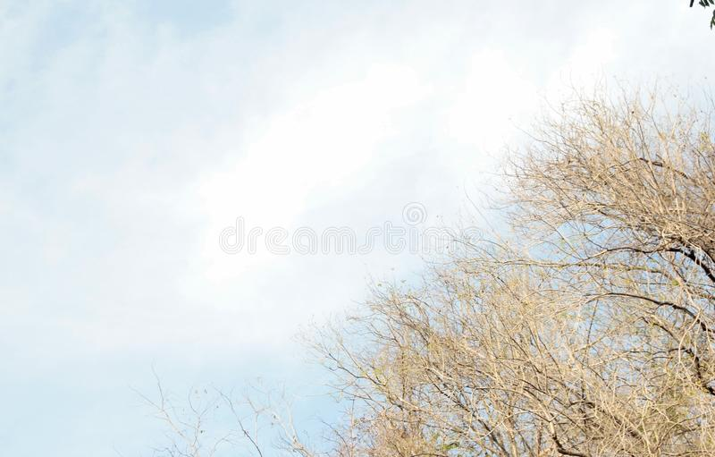 Branches without leaves with sky stock photo