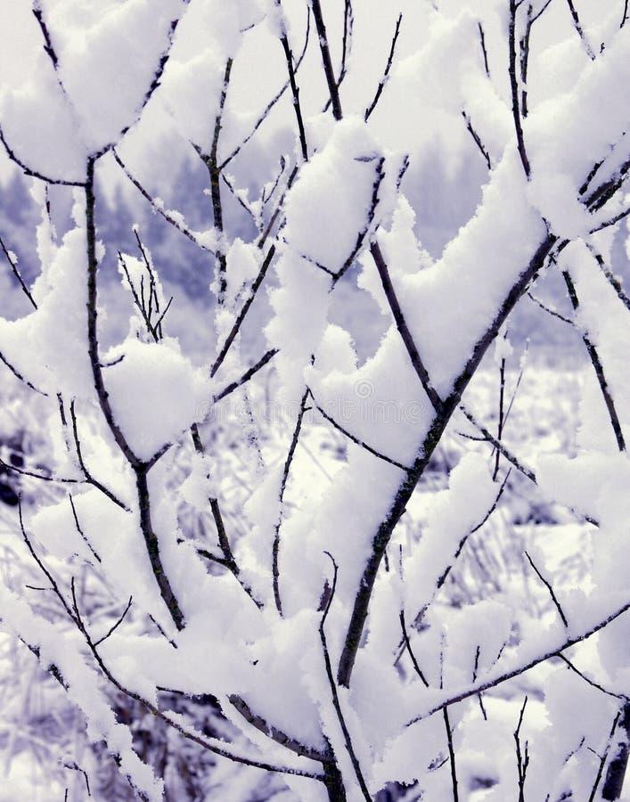 Branches Min Snow Arkivfoto