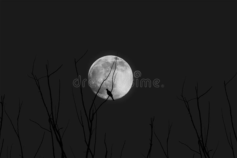 Branches with Moon at Night royalty free stock photo