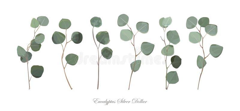 Branches naturelles de feuillage de dollar en argent d'eucalyptus avec des feuilles illustration de vecteur