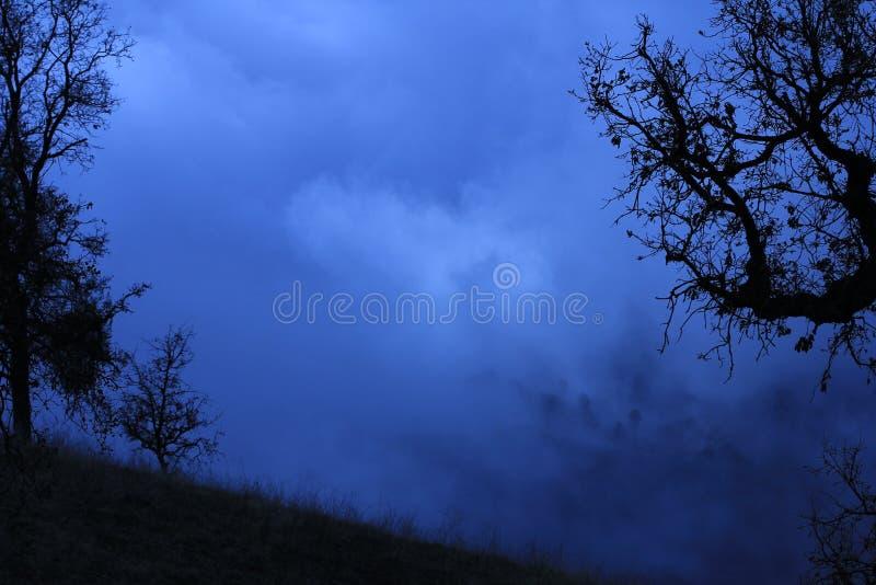 Branches noires en brouillard bleu. photos libres de droits