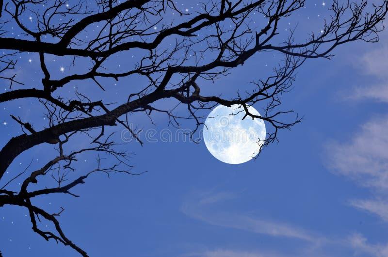 Branches noires et pleine lune pendant l'hiver photographie stock