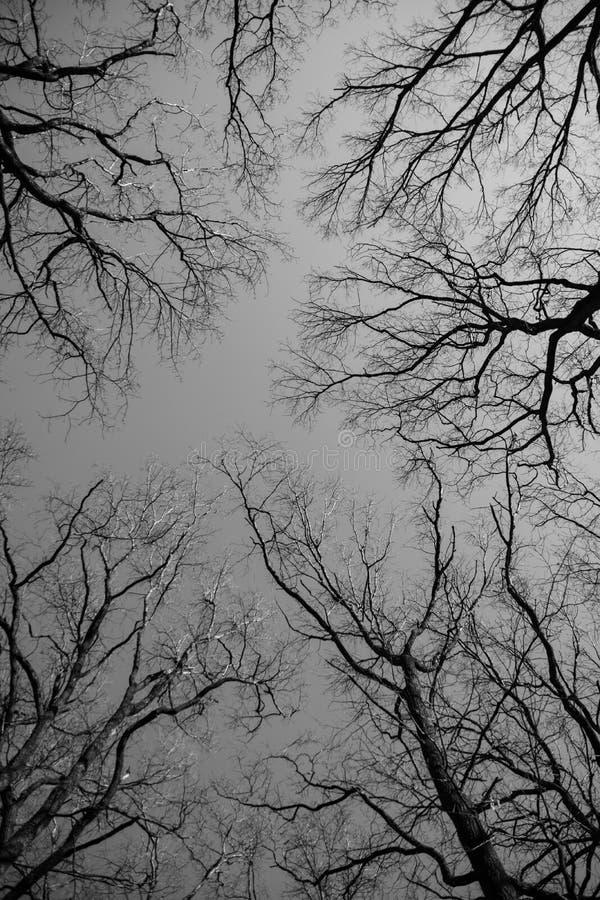 Branches nues d'arbres photographie stock libre de droits