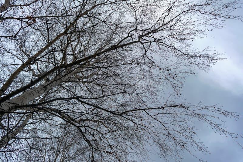 Branches nues d'un arbre avec des restes de feuillage contre un ciel nuageux d'automne photos libres de droits