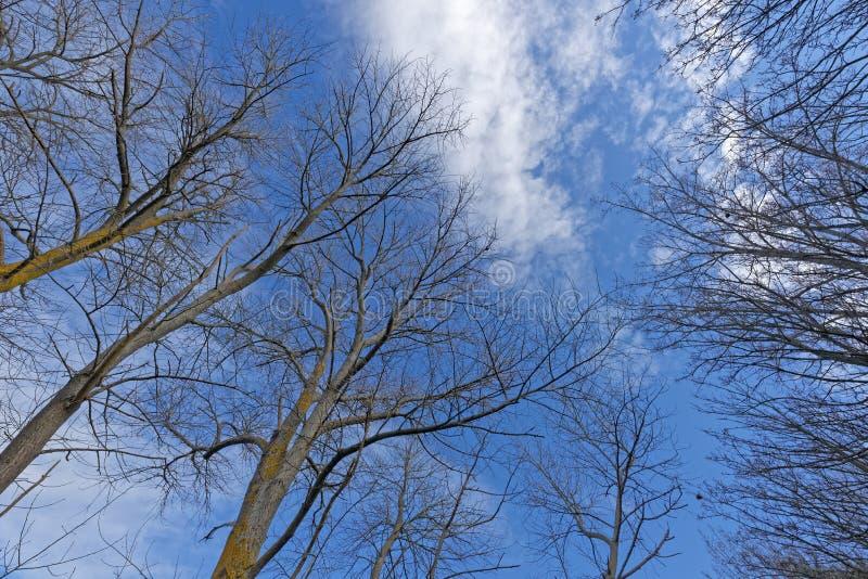 Branches nues d'un arbre contre un ciel bleu avec des nuages photographie stock