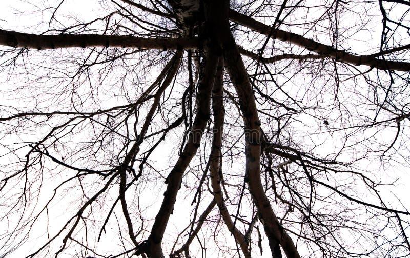 Branches nues d'un arbre contre le ciel photographie stock