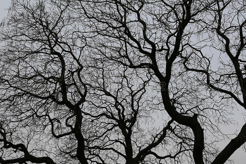 Branches nues d'un arbre contre le ciel foncé images stock