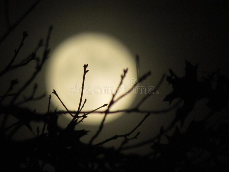 Branches over the full moon royalty free stock images
