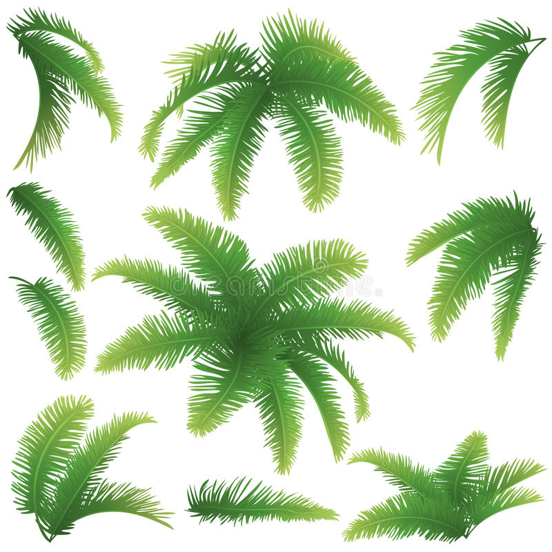 Branches of palm trees stock illustration