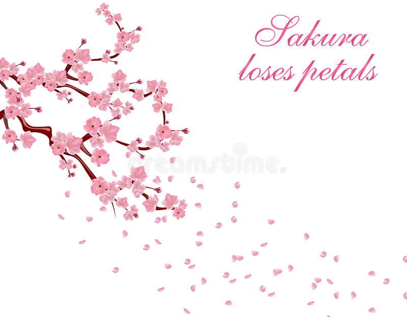 Branches with pink flowers and cherry buds. Sakura inscription. Petals flying in the wind. isolated on white background stock illustration