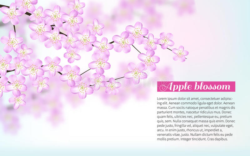 Branches with pink flowers isolated on white background Bright flying petals. Festive banner and poster. stock illustration