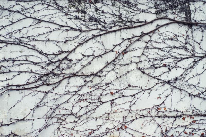Branches of plants on a wall stock photo