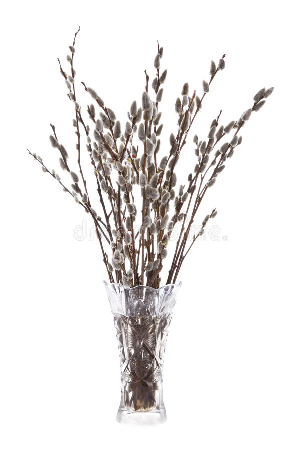 Download Branches of the willow stock image. Image of growing - 24828303