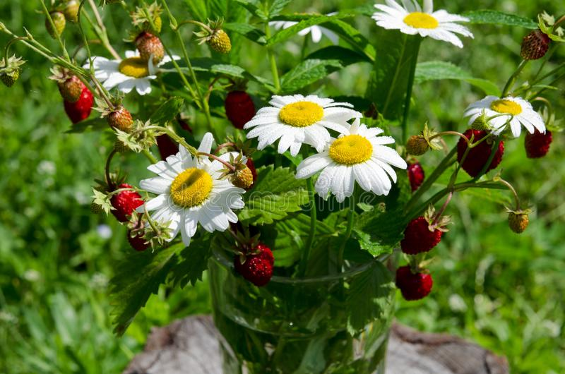 Branches of red ripe strawberries, white daisies and mint leaves stand in a glass of water on a wooden stump. Against the background of green grass, berry royalty free stock photo