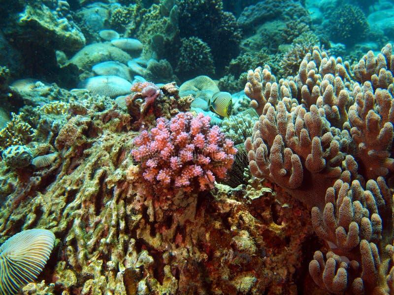 Download Branches Of Rigid Corals, Vietnam, Nha Trang Stock Image - Image: 19380275