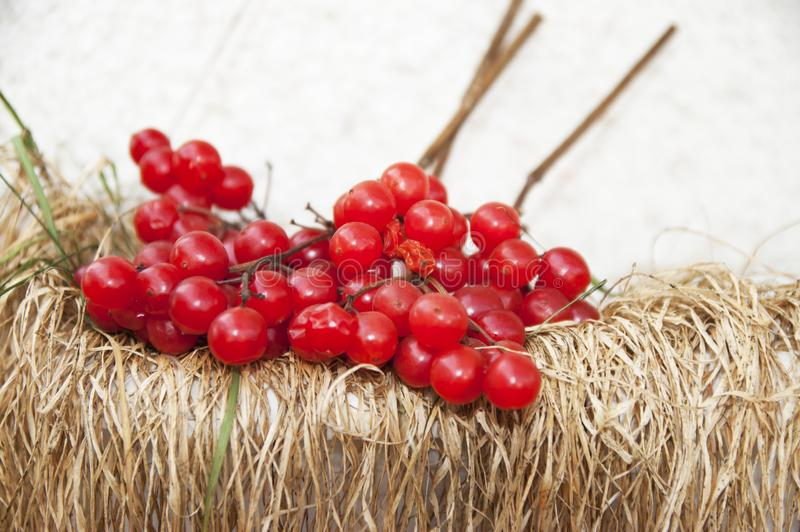 Branches of a ripe guelder-rose stock photos