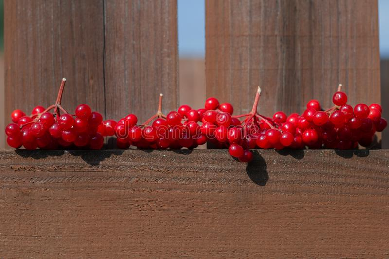 Branches of ripe red viburnum lie on a wooden fence. Harvest. Berries for the treatment of influenza. Cold medicine stock images