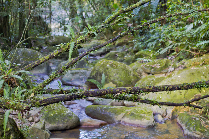 Branches through a river path in El Yunque stock images