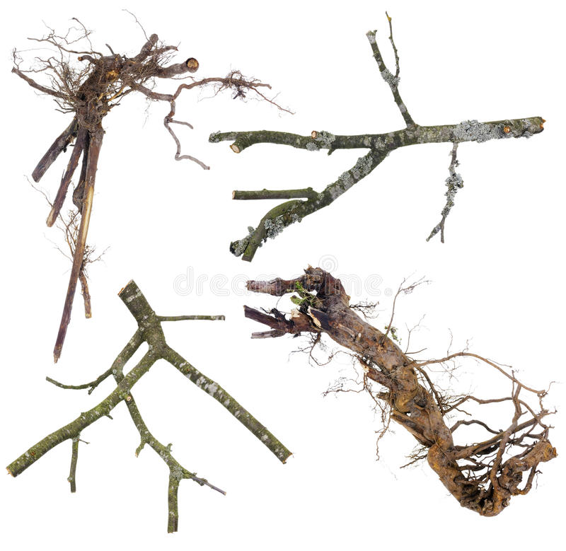 Branches and roots set for Halloween royalty free stock image