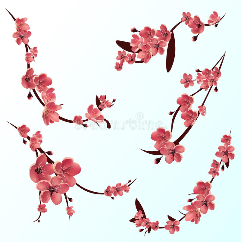 Branches of rose blossoming sakura . Japanese cherry tree. Vector Isolated icon Set royalty free illustration