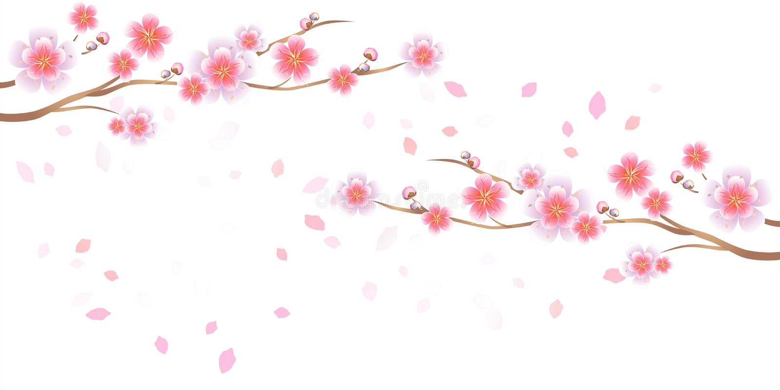 Branches of Sakura and petals flying isolated on white background. Apple-tree flowers. Cherry blossom. Vector EPS 10, cmyk vector illustration