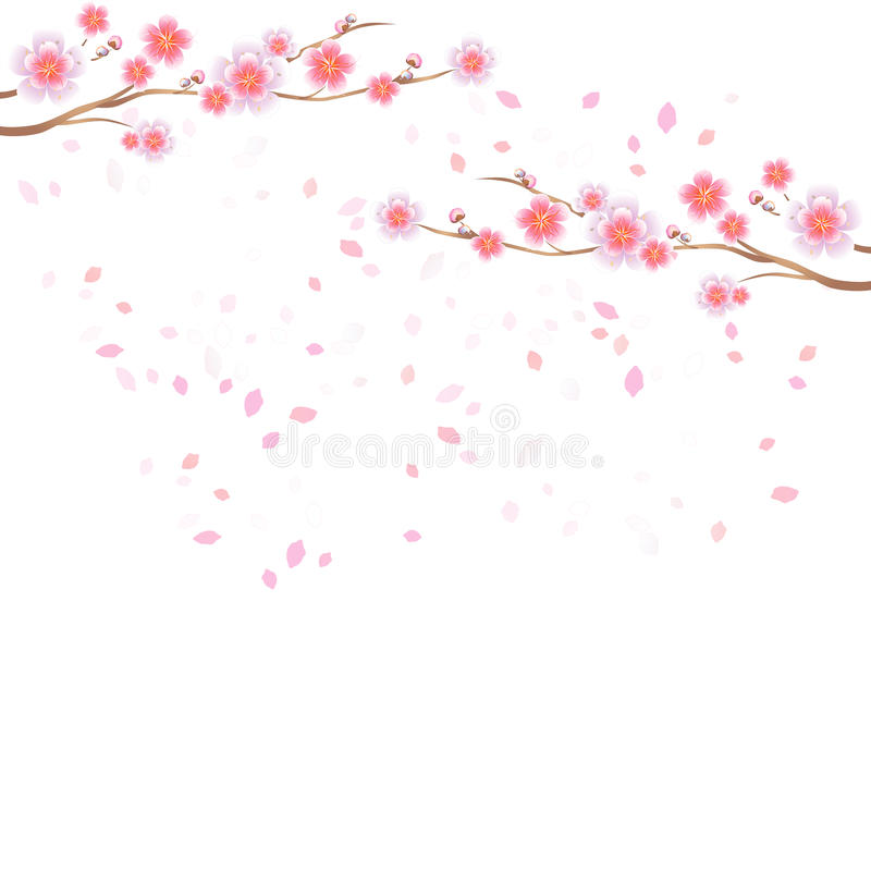 Branches of Sakura and petals flying on white background. Apple-tree flowers. Cherry blossom. Vector EPS 10, cmyk stock illustration