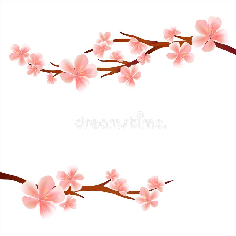 Branches of Sakura with Pink flowers isolated on White background. Apple-tree flowers. Cherry blossom. Vector EPS 10, cmyk royalty free illustration