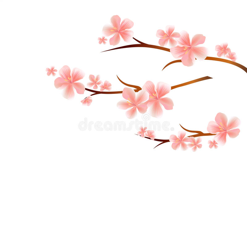 branches of sakura with pink flowers isolated on white background rh dreamstime com cherry blossom vector art cherry blossom vector black and white