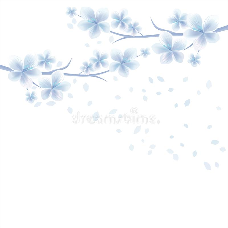 Branches of Sakura with White Blue flowers and flying petals isolated on White background. Apple-tree flowers. Cherry blossom royalty free illustration
