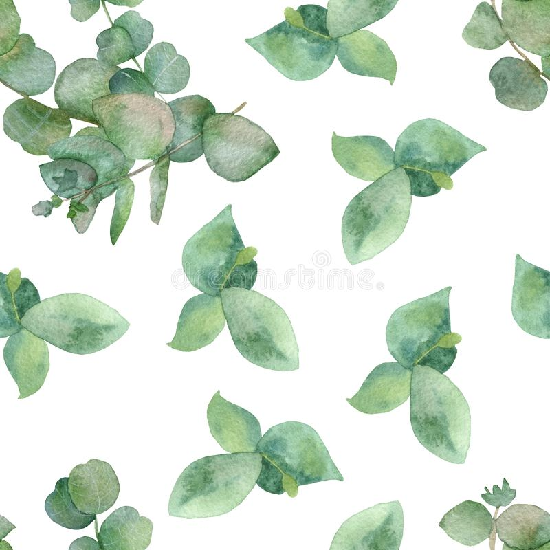 Branches sans couture d'aquarelle botanique et feuilles vert mod?le d'eucalyptus m?dicinal d'isolement sur le fond blanc illustration libre de droits