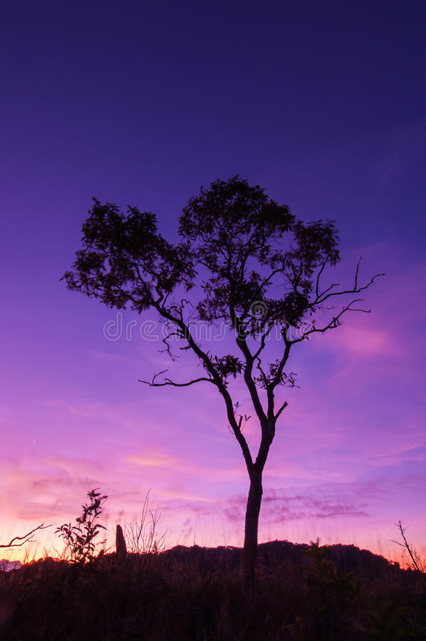 Download Branches Silhouette. Royalty Free Stock Images - Image: 33436469