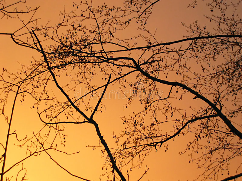 Download Branches Silhouetted Against The Sky Stock Image - Image: 355857