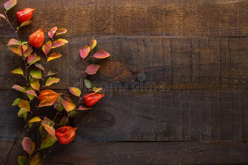 Branches with small colorful autumn leaves Spiraea Vanhouttei  and  fruit of  Physalis on the dark wooden table. Autumn composit royalty free stock images
