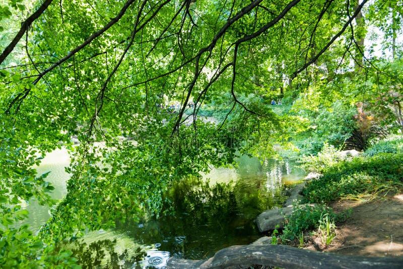 Branches touchant l'eau au rivage photo libre de droits