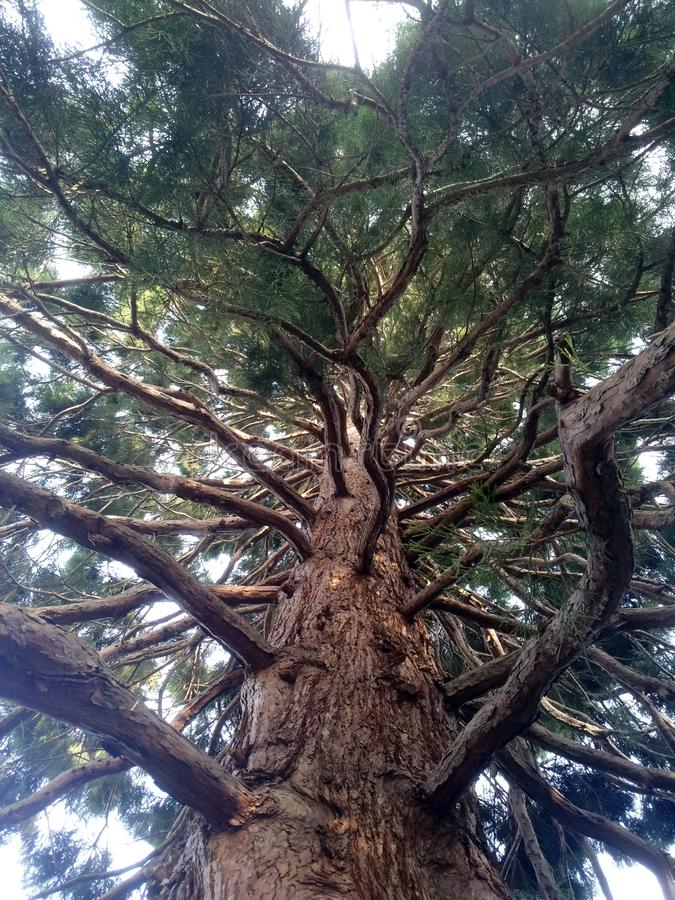 Branches Tree royalty free stock images